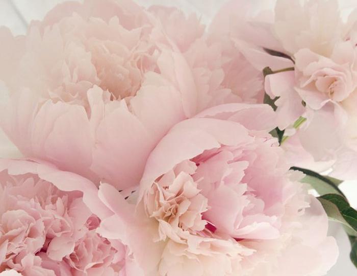 Pink chrysanthemum Flower Bouquet - Spree Designs