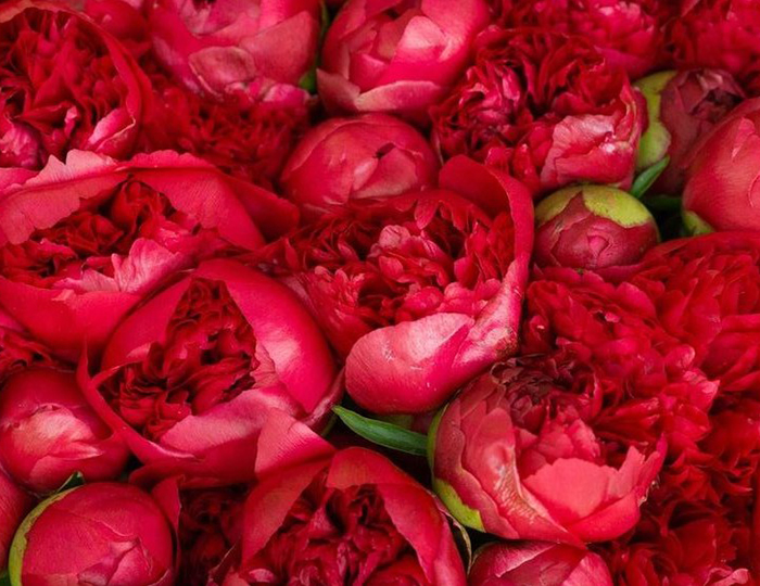 Red rose Flower Bouquet - Spree Designs