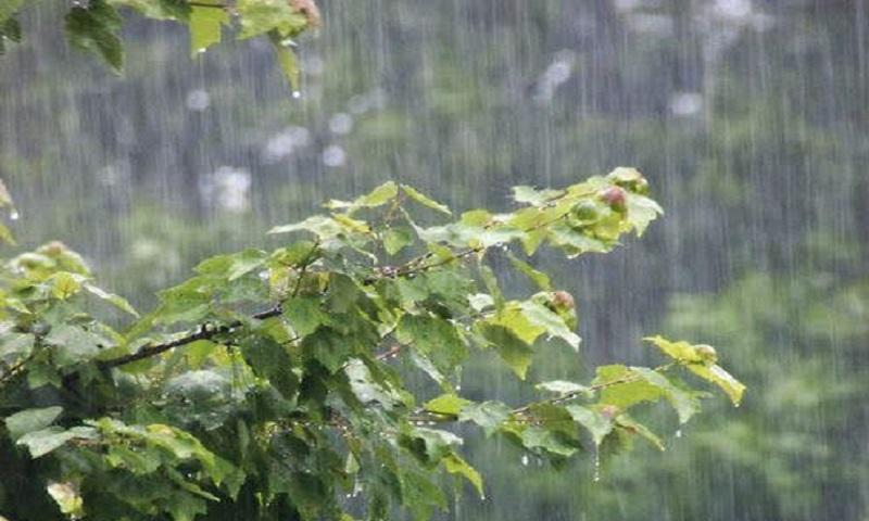 NO RAIN, NO FLOWERS.